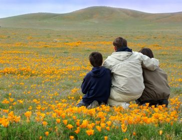 father and sons in poppy field